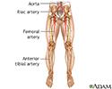 Arterial bypass leg - series - Normal anatomy