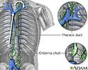 Circulation of lymph