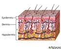 Skin layers